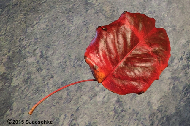 Post_2015-12-16_Image_Leaf-Isolated