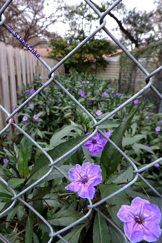 Post_2015-12-25_Image_PurpleChristmas