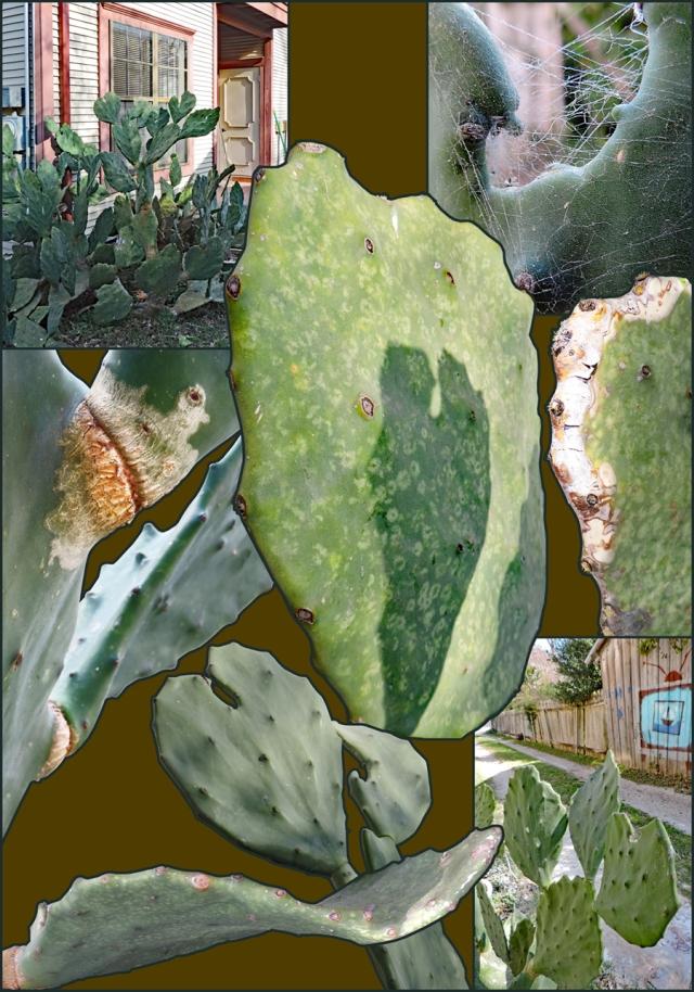Post_2016-02-24_Image_CactusCollage