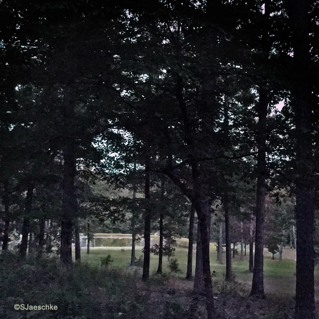 Post_2016-07-18_Image_Pond-at-dusk