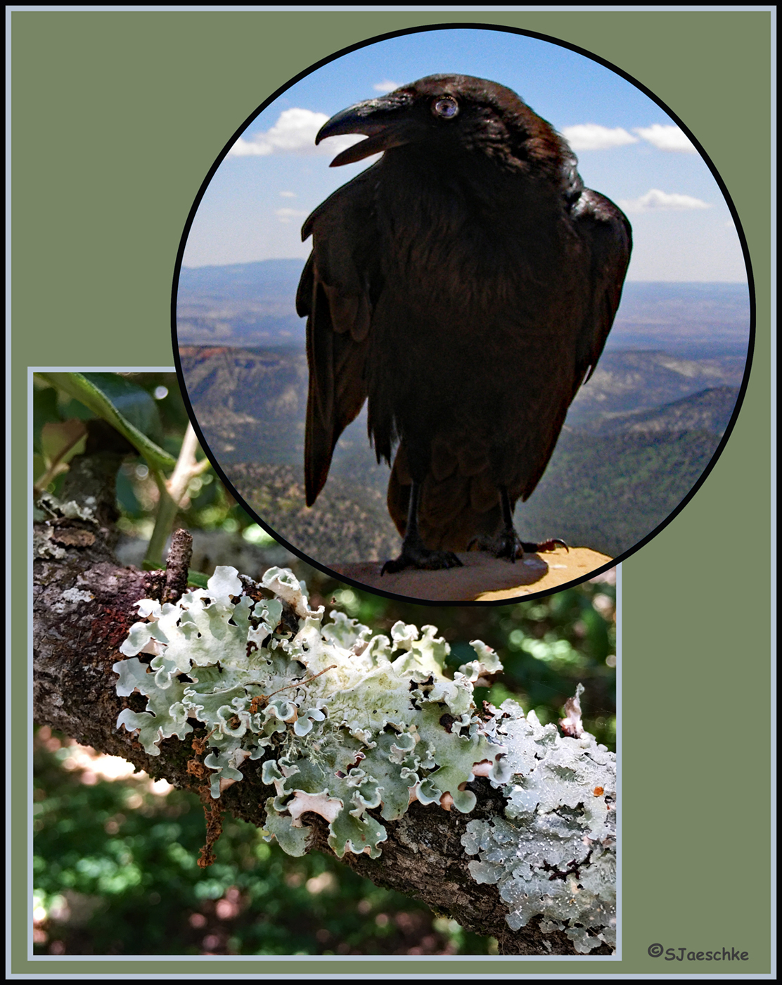 Post_2017-06-01_Image_Collage-Lichen-Raven