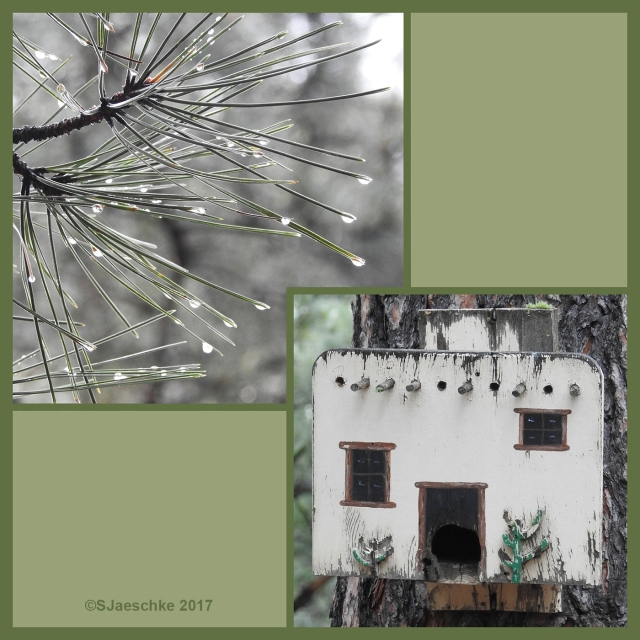 Post_2017-07-23_Image_ForestBath