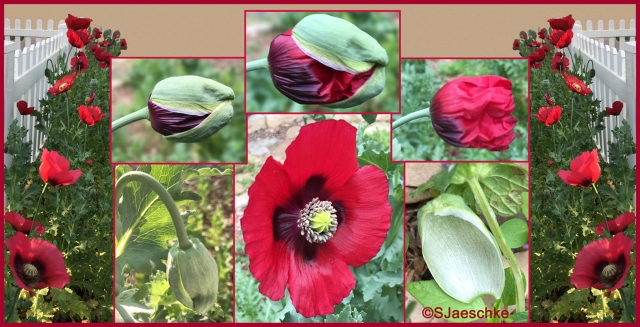 Post_2018-03-31_PoppyCollage