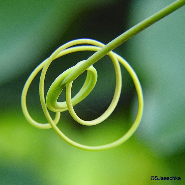 Post_2018-04-07_Image_Tendril