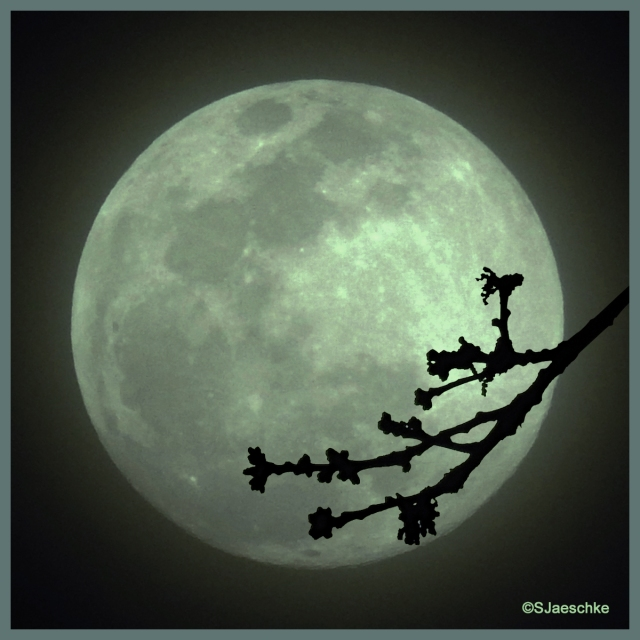 Post_2019-02-19_Image_SuperMoon