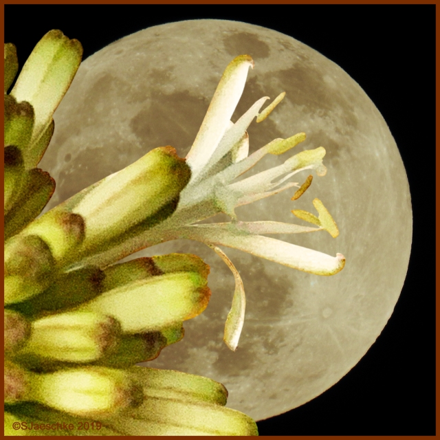Post_2019-12-16_Image1_Moon&Dracaena